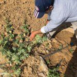 Italy to allow entry to 18,000 non-EU seasonal farmhands