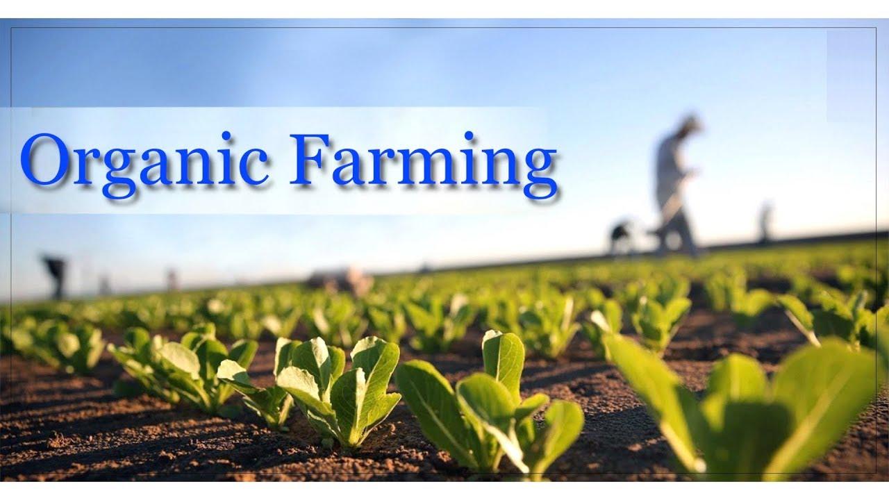 نتیجه تصویری برای کشاورزی organic
