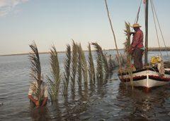 """Sharfia"" fishing in Kerkennah Islands classified as UNESCO intangible heritage"